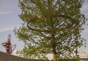 'History Trees', Ackroyd & Harvey